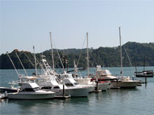 Several sportfishing charters offer deep sea fishing in Golfito.