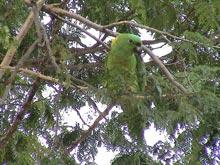 Viele exotische Tiere leben in Costa Rica in freier Wildbahn.