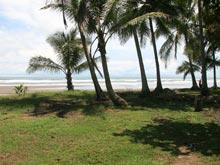 Der Strand ist breit und bietet unter den Palmen sogar ein wenig Schatten.