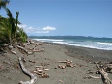 Der dunkle, mit Kokosnüssen übersäte, Sandstrand von Playa Zancudo.