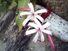 Blumen am Strand.