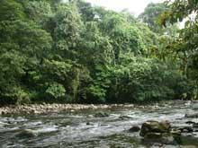 El Río Peje en el Parque Nacional Braulio Carrillo.