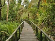Hay varios senderos en el parque.