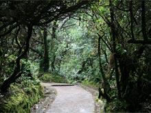 Hay muchas rutas de senderismo, donde se puede ver la variedad de plantas y la fauna.