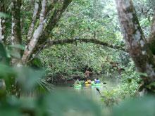 Una de las mejores maneras de observar monos y perezosos es desde el Río Ernesto flotando en un kayak.